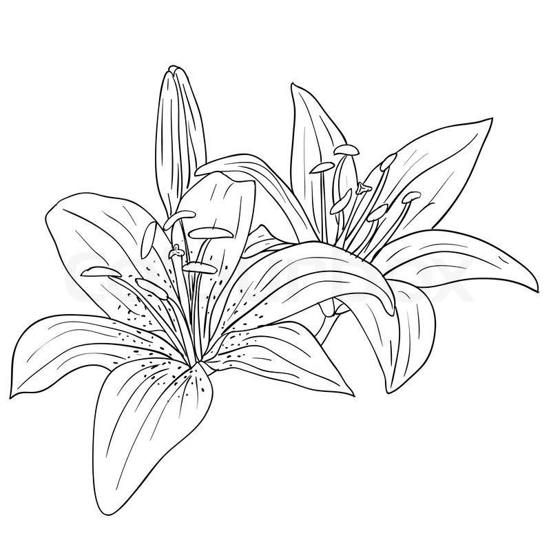 floralen design element und von hand gezeichnet vektor