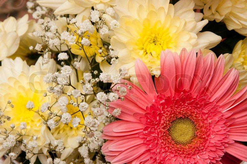 sch ner blumenstrau mit daisy und chrysanthemen stockfoto colourbox. Black Bedroom Furniture Sets. Home Design Ideas