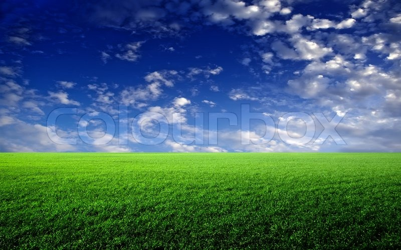 Green Grass The Blue Sky And White Clouds Stock Photo