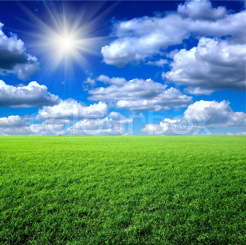 Green grass the blue sky and white clouds Stock Photo Colourbox