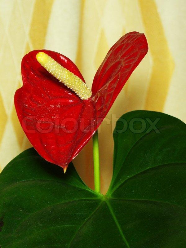 Flower Box Decorations For Valentine