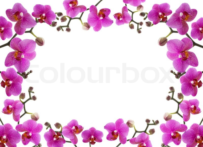 Close Up Frame Of A Beautiful Orchid On White Background Stock