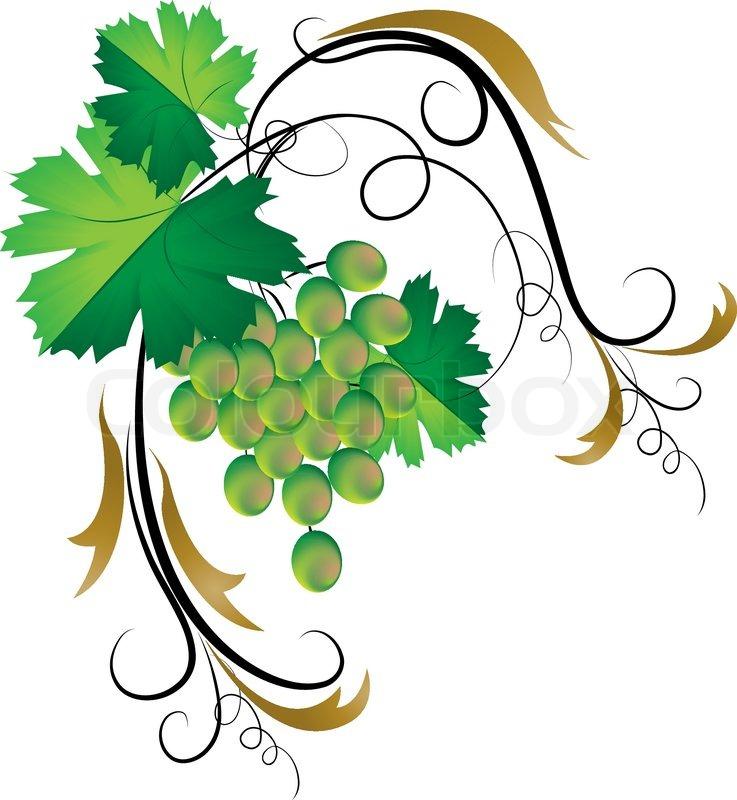 Decorative grapevine | Stock Vector | Colourbox