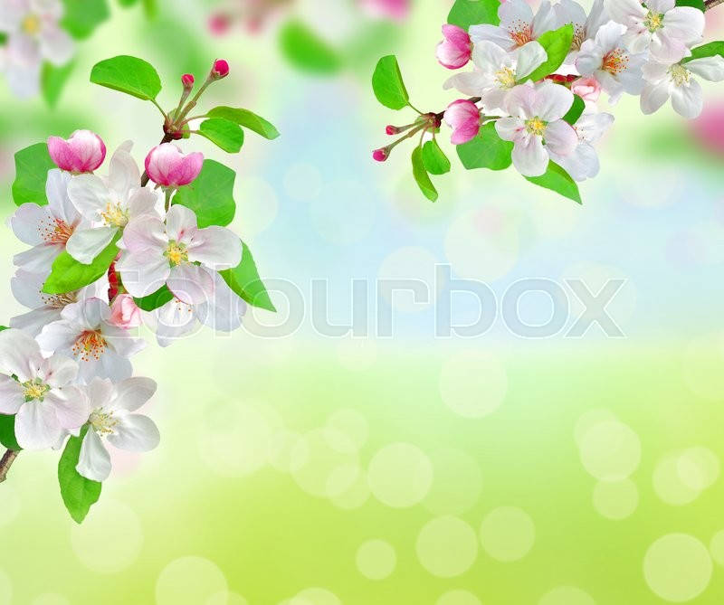 Spring blossom over bright nature background, stock photo