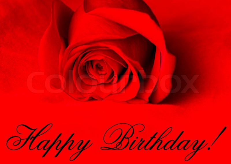 Stock image of 'Happy Birthday! Red rose on red background'