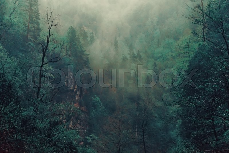 Beautiful mystical landscape. Fog in the forest, dark color. Mist among woods, stock photo