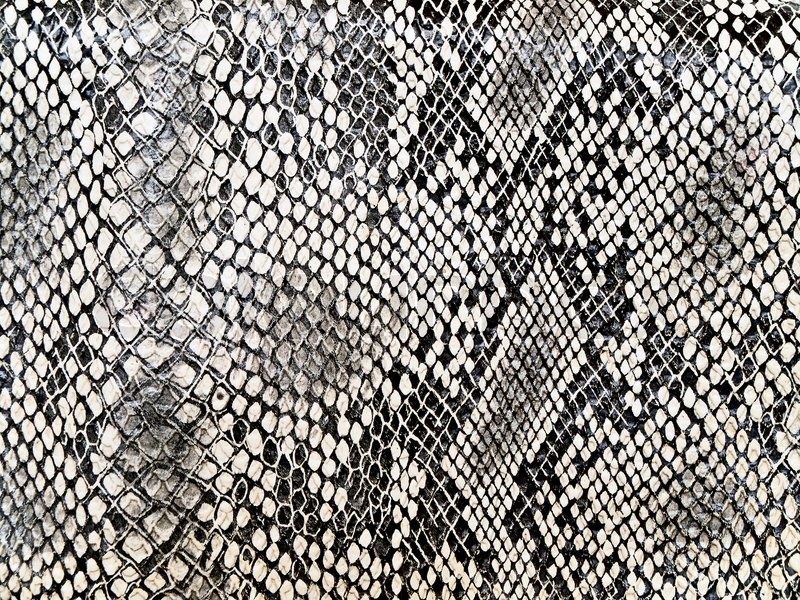 Black And White Background In Snake Pattern Style Stock Photo Colourbox