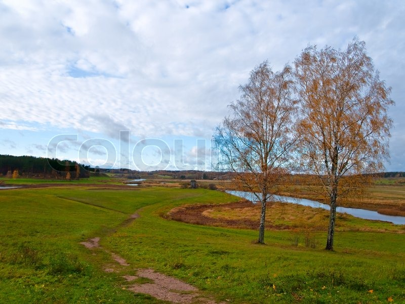 Stock image of 'Two autumn birch in the rural landscape'