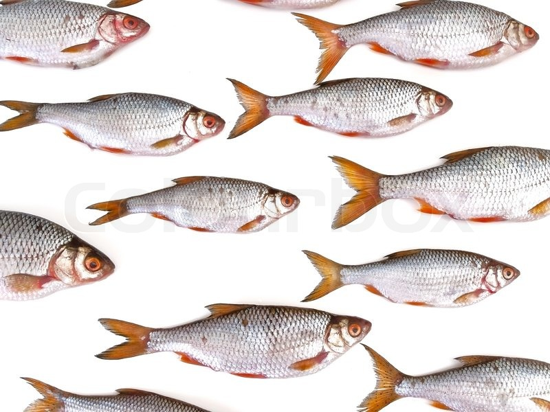 Fish group against the white background stock photo for Best white fish to eat