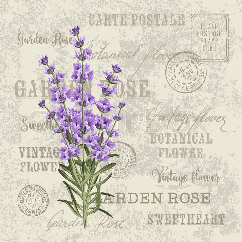 The lavender elegant card. Vintage postcard background vector ...