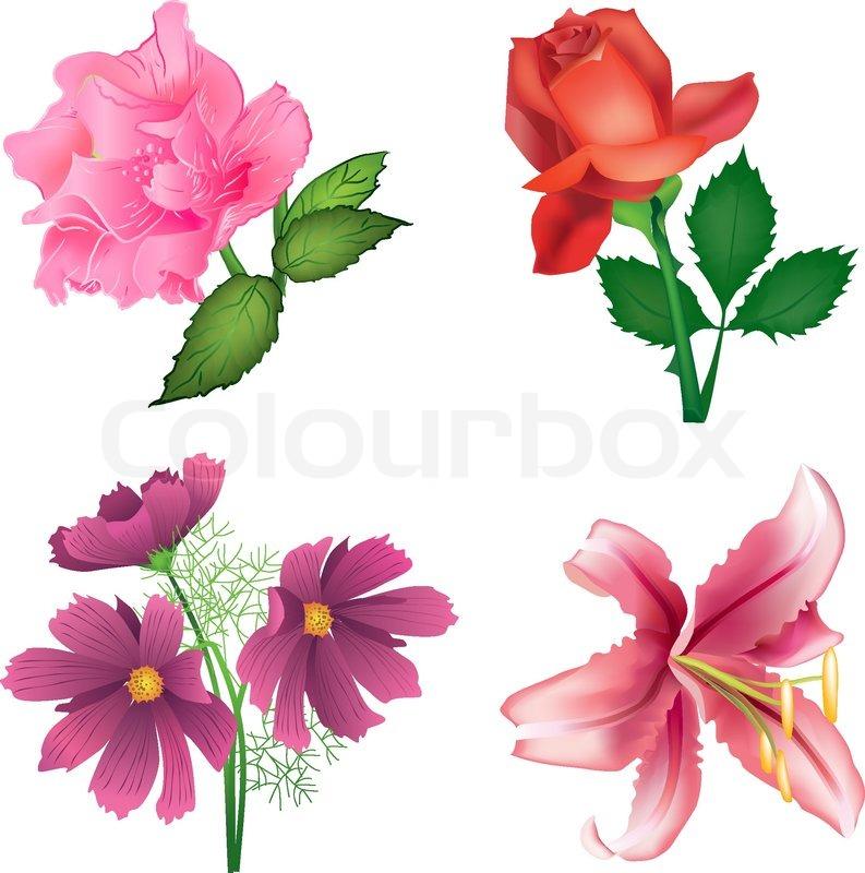 sch ne blumen f r design rosen lilien und stock vektor. Black Bedroom Furniture Sets. Home Design Ideas