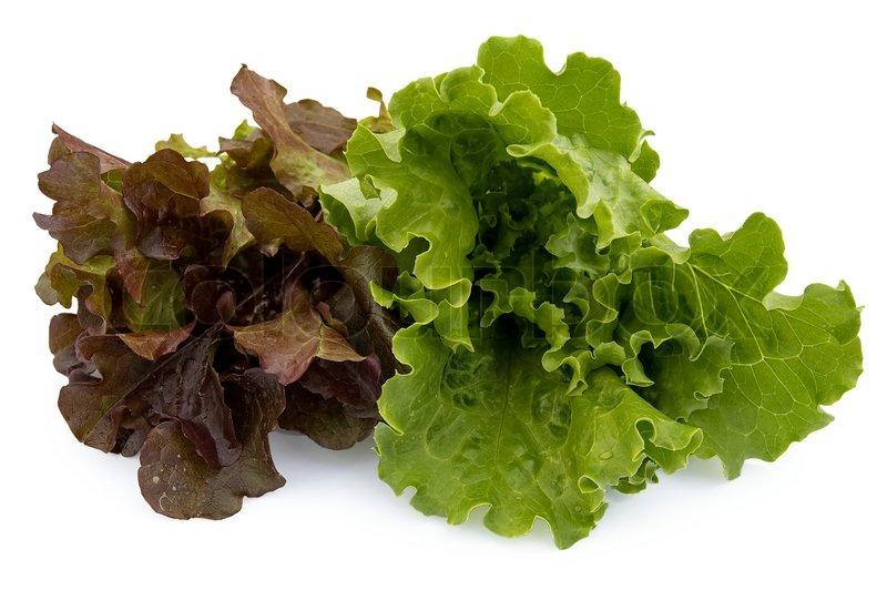 gr n und rotbraun braun b ndel von salat auf einem wei en hintergrund stockfoto colourbox. Black Bedroom Furniture Sets. Home Design Ideas