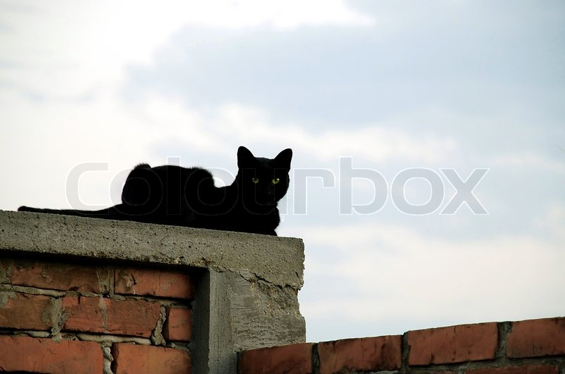 Black Cat With Green Eyes Over Brick Fence Relaxing