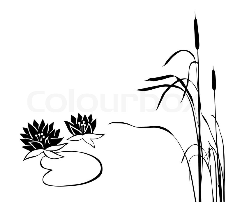 Vector silhouette of the marsh plants on white background ...