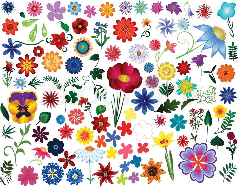 Set Of Colored Vector Floral Design Elements Flowers And