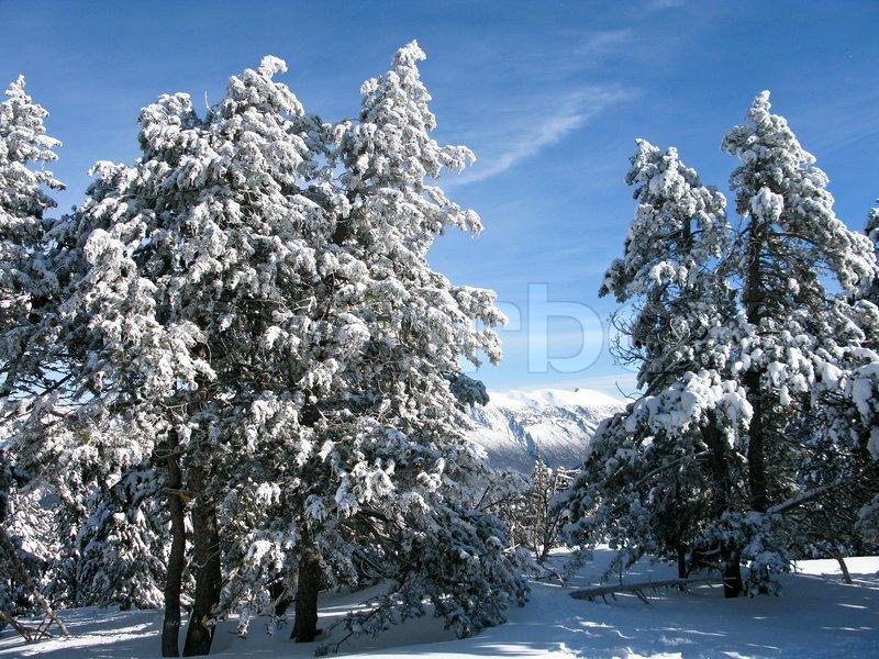 Stock foto af 'skov om vinteren dækket af sne med blå himmel'