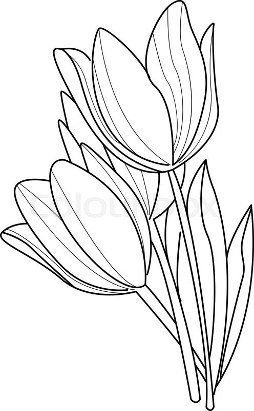 tulip flowers sketch vector illustration flower collection hand
