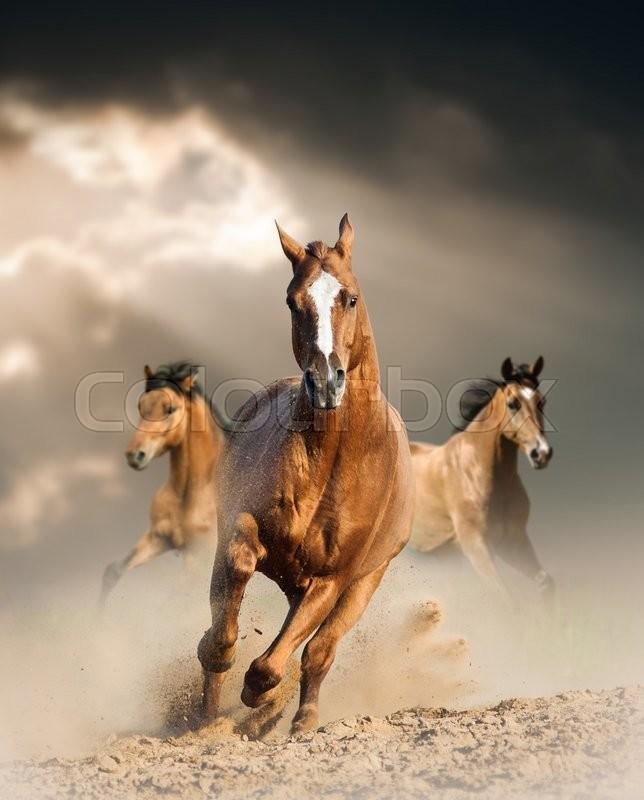 Wild Horses Running Wild In Dust Under Ray Of Light