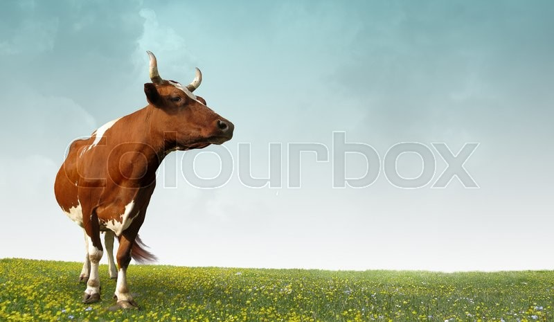 Illustration on the theme of the farm, stock photo