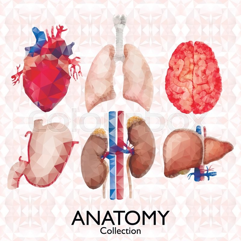 Watercolor Anatomy Collection Polygonal Organs Heart Lungs