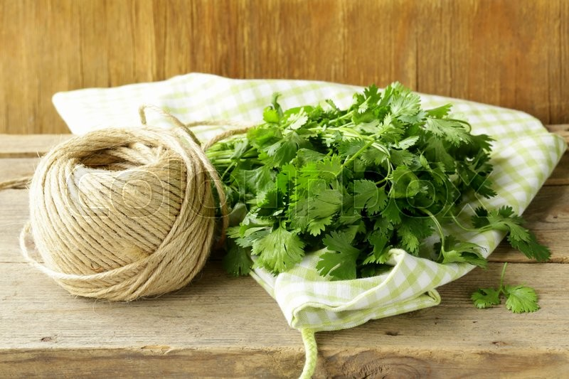Bunch of fresh green coriander (cilantro) on a wooden table, stock photo