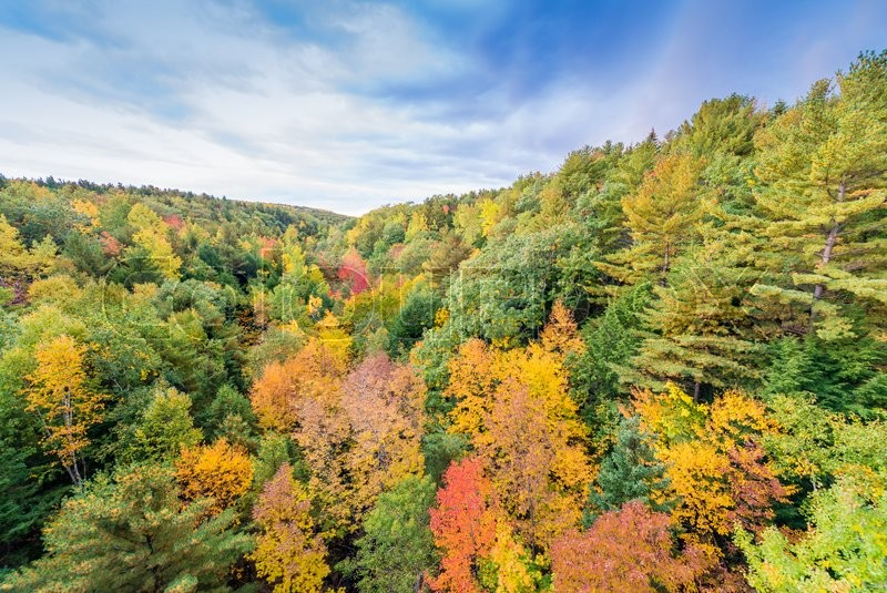 Autumnal landscape. Leaves and trees background, red foliage, stock photo