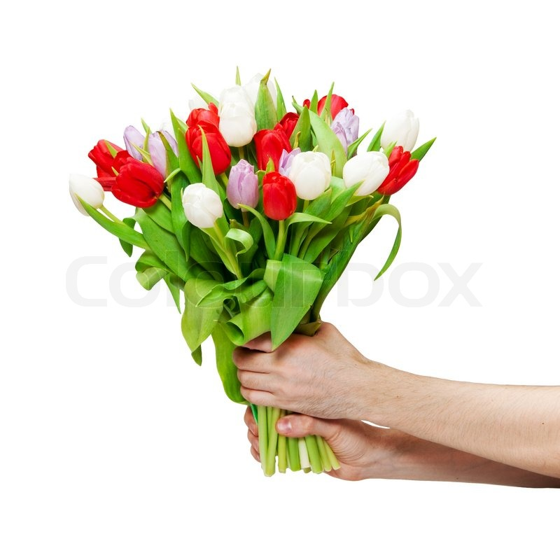Flowers in women\'s hands on a white background | Stock Photo | Colourbox