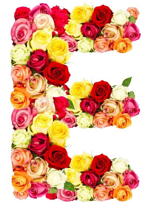 E, roses flower alphabet isolated on white | Stock Photo ...