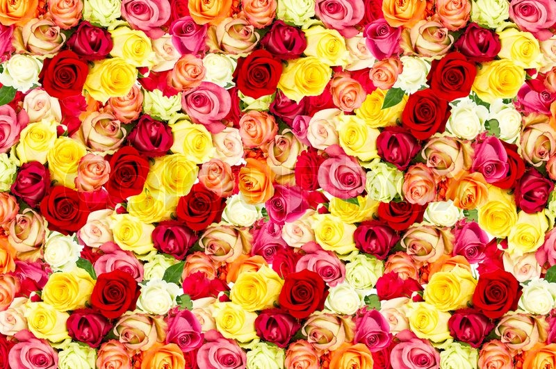 Roses colorful flowers background stock photo colourbox for Pics of colourful roses