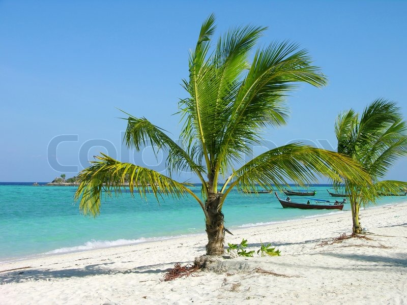 Christmas Tree Manufacturer Thailand : Tropical beach with palm trees lipe island thailand