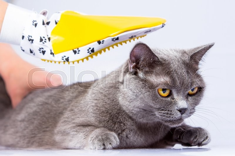 Doctor examines a cat on a white table against a white background, stock photo