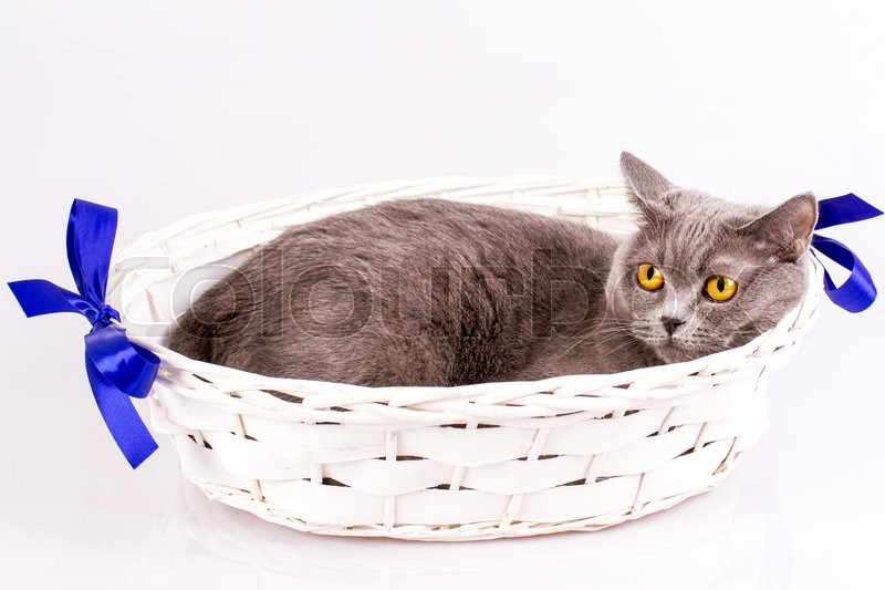 The cat is lying in a basket on a white background, stock photo