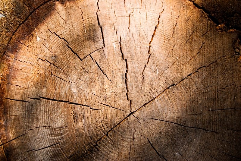Cut wooden log texture old wood stock photo colourbox