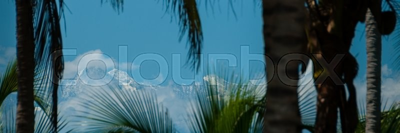 Palm tree in front of mountain with ice on top at the beach of Palomino, Colombia, stock photo