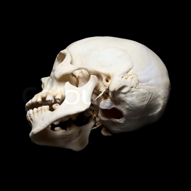 white real skull with black background stock photo
