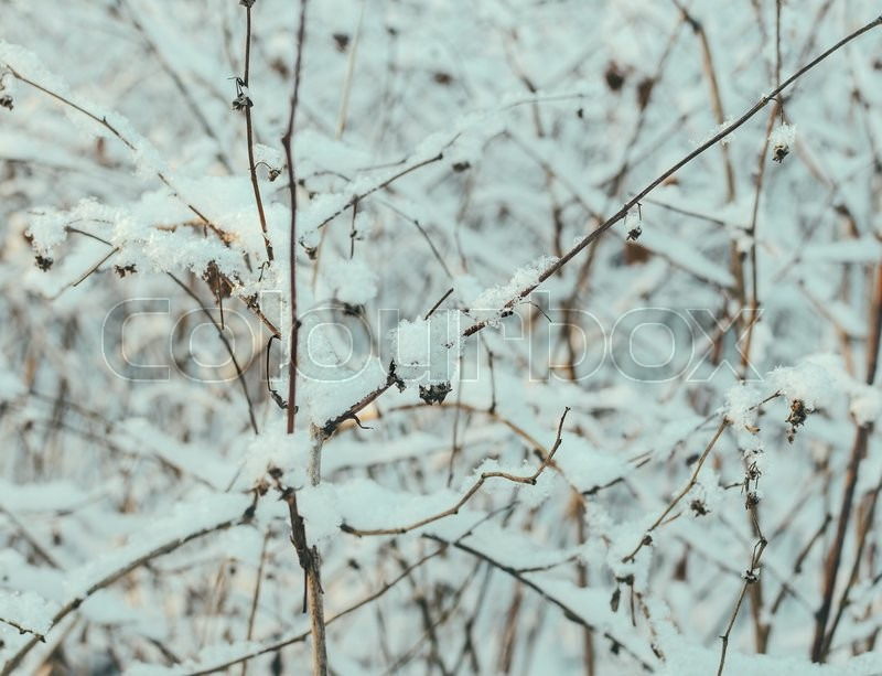 Grass in snow on the frozen lake, stock photo