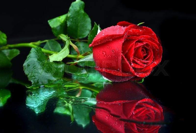 Valentine Single Beautiful Rose With ...