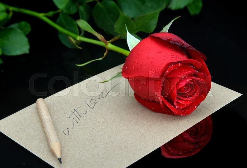 valentine single beautiful rose with fresh water drop  stock, Natural flower