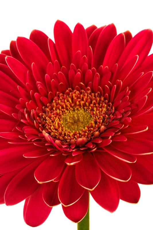 Beautiful Brightly Red Flower On A Stock Photo Colourbox