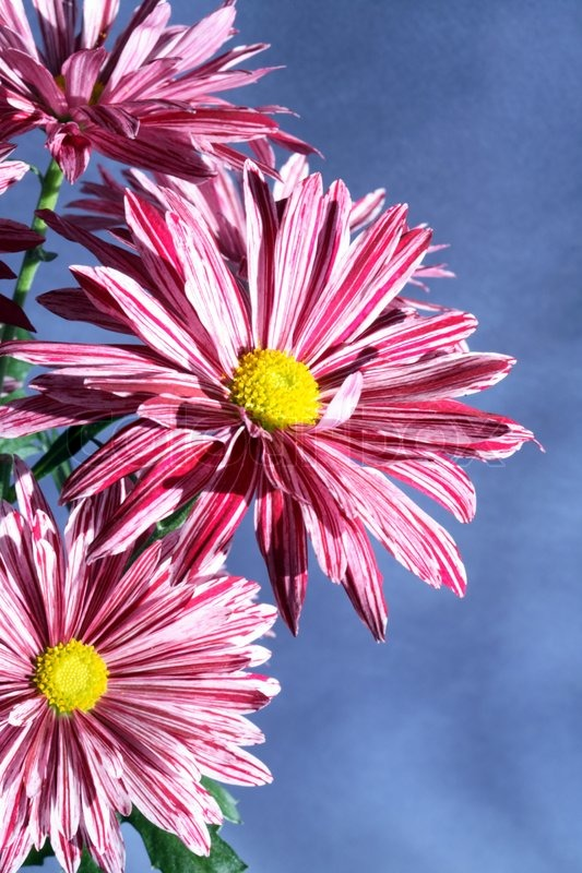 Extreme Closeup Of Nice Pink Flowers On Stock Photo Colourbox