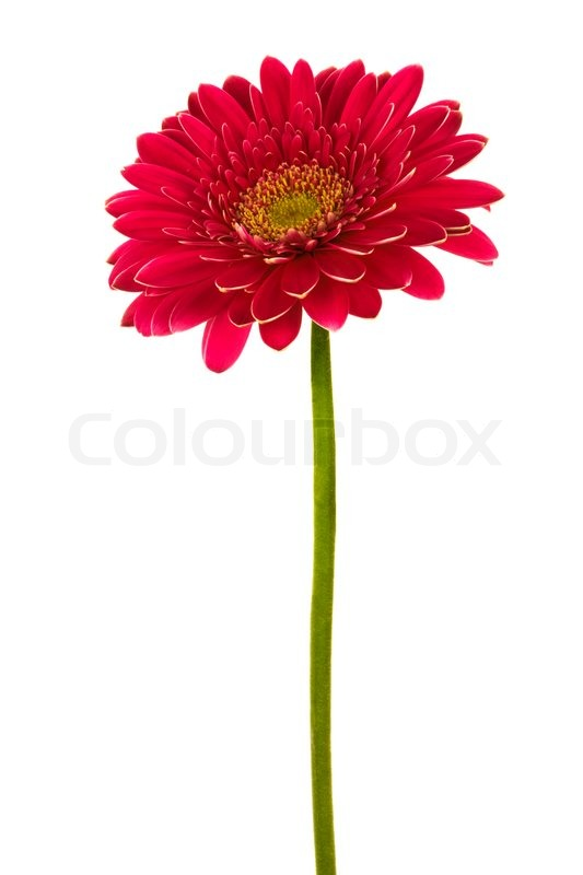 Roser blomster foto bilde 328884 picture