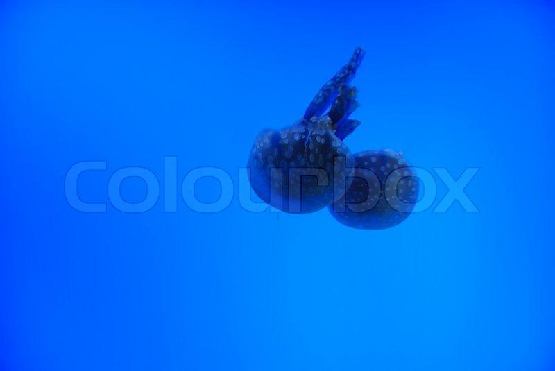 Danger wild jellyfish in the deep sea, stock photo