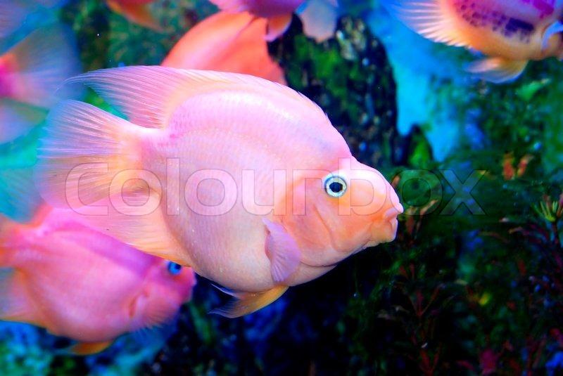 Beautiful Sea Beautiful Fish in The Sea'