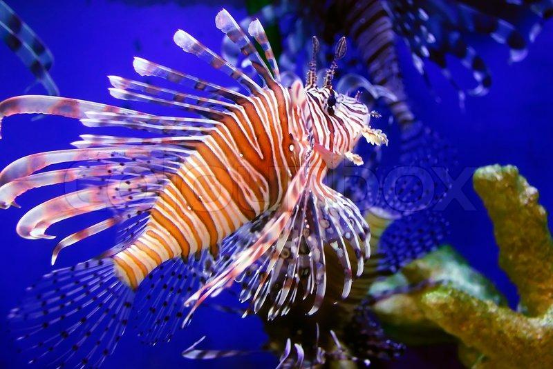 fish aquarium live wallpaper download for pc