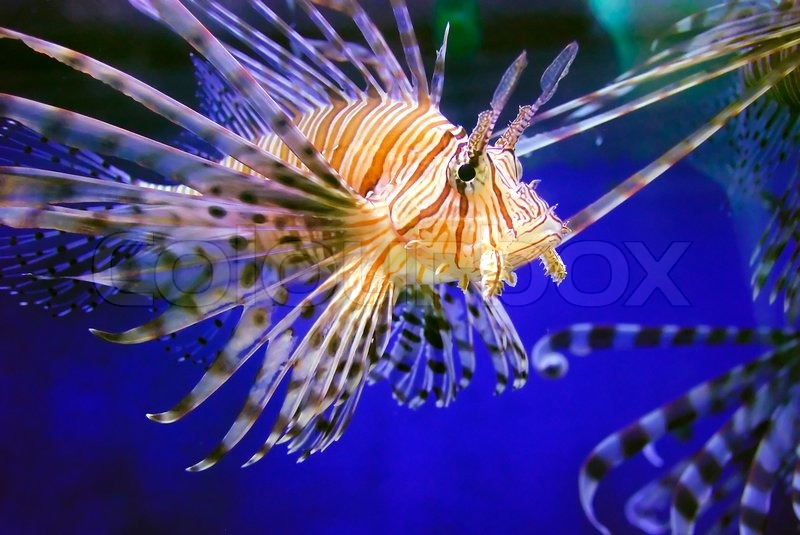 Fish   on 1726212 920259 Beautiful Fish In The Sea Jpg
