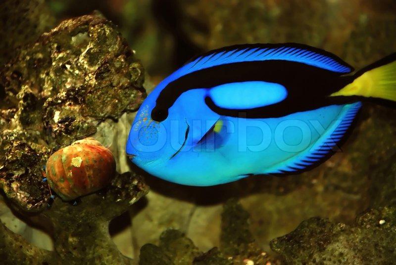 Sch ne fische im meer stockfoto colourbox for Fisch bilder