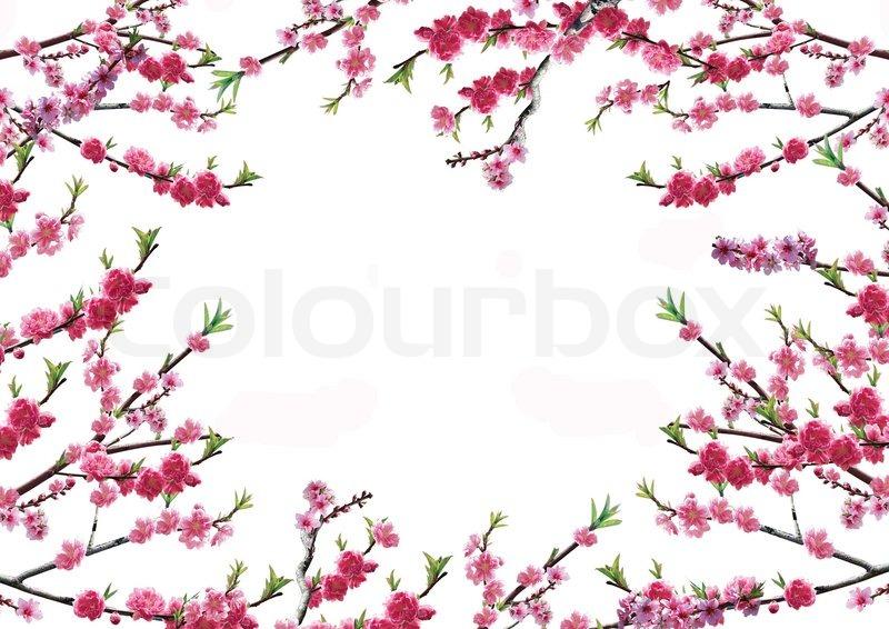 cherry zweig mit rosa bl ten auf wei em hintergrund stockfoto colourbox. Black Bedroom Furniture Sets. Home Design Ideas