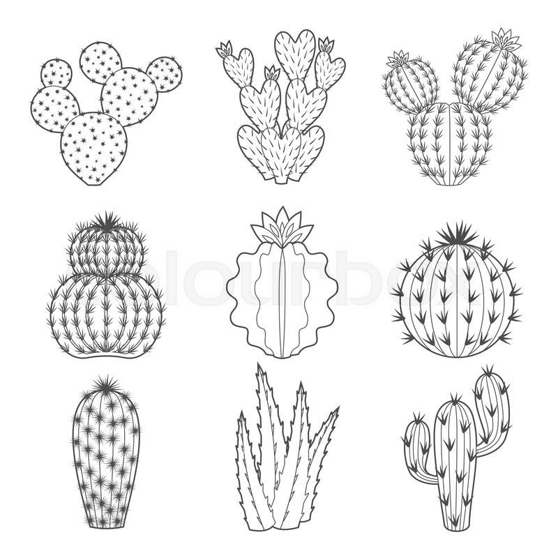 Vector set of contour cactus and succulent plants. Decorative ...