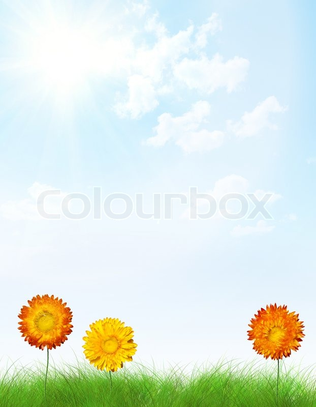 Letter Frame Made From Flowers In Grass Vertical Conceptual Background
