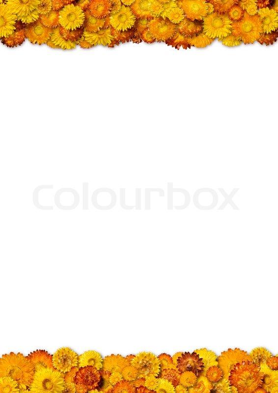 gelbe und orange blumen rahmen mit platz f r die kopie. Black Bedroom Furniture Sets. Home Design Ideas